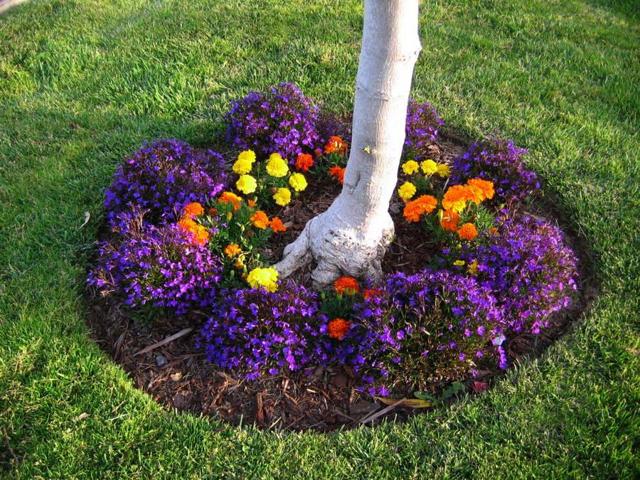 Как правильно сажать цветы в саду фото 19